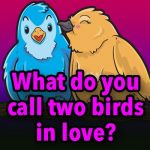 What do you call two birds in love?