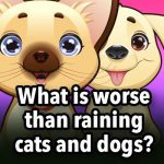 What is worse than raining cats and dogs?