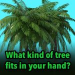 What kind of tree fits in your hand?