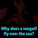 Why does a seagull fly over the sea?