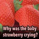 Why was the baby strawberry crying?