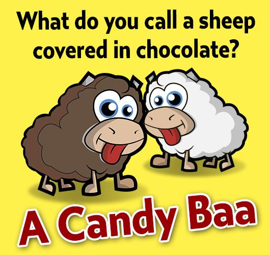 Joke: What do you call a sheep covered in chocolate? A Candy Baaa